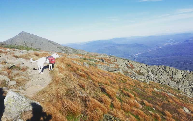 Hiking the Appalachian Trail with a Dog