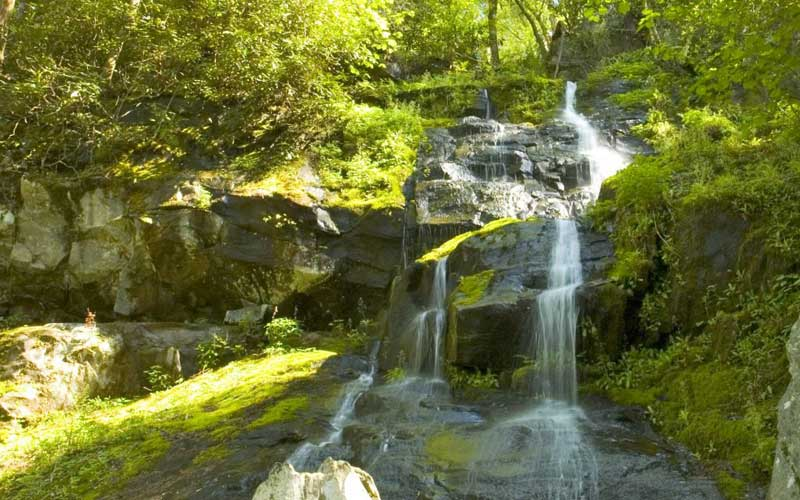 Hen Wallow Falls Trail
