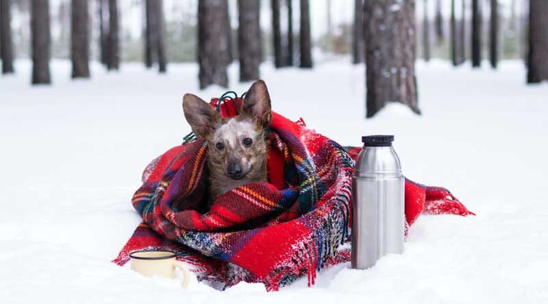 Keep your dog warm while winter camping